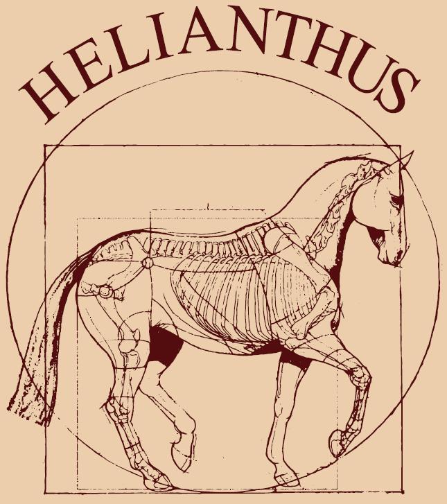 HELIANTHUS Lótakarmányok